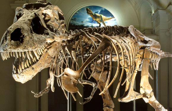 Zergatik daude oraindik dinosauro hezurrak?